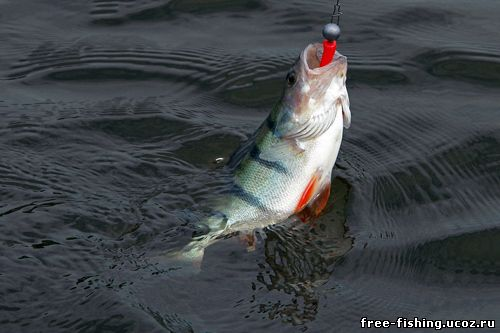 отчет о рыбалке в завидном